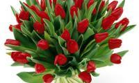 passie-flora-7.jpg